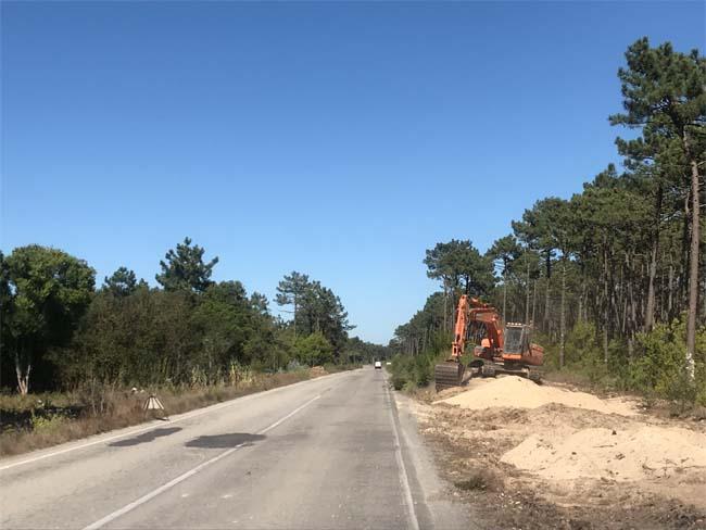 Resultado de imagem para EDP Distribuição aposta na proteção da floresta no distrito de Aveiro